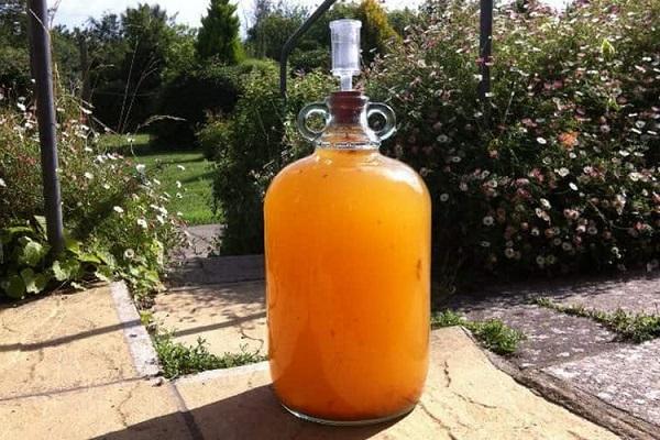 приготовление вина из абрикос