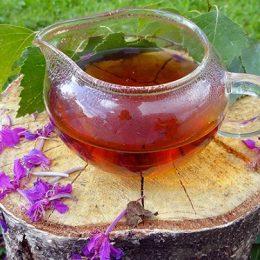иван чай как собирать и сушить